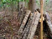 Each log has been inoculated with shiitake mushroom spawn
