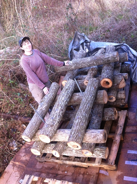 Teal with the new shiitake logs.