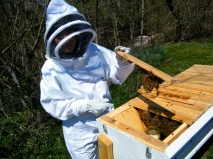 Teal opening the bee hive