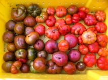 Funky and delicious tomatoes!
